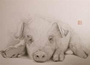 Real Pig Face Drawing