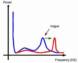 Herzfrequenz Berechnen : n laryngeus superior ~ Themetempest.com Abrechnung