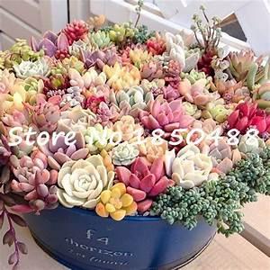 Bonsai flowers indoor fleshier plant, lithops stone ...