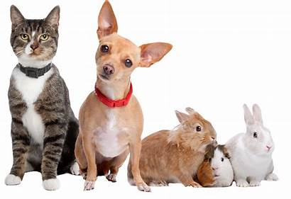 Pets Pet Resources Care Service Need Cutout