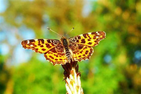 Hewan, Invertebrata | Hewan, Gambar, Alam