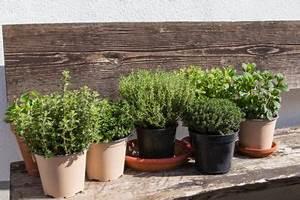 Balkon Bäume Im Topf : oregano im topf ziehen tipps zur optimalen pflege ~ Frokenaadalensverden.com Haus und Dekorationen