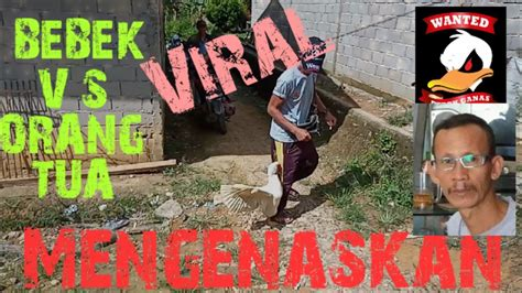 Viral Mengenaskan Bebek Vs Orang Tua🤕 Youtube