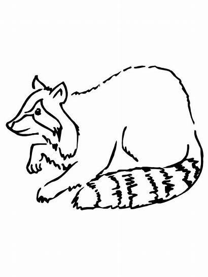Raccoon Coloring Pages Printable Drawing Simple Clipart
