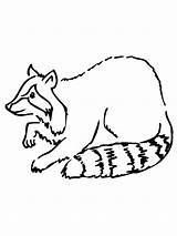 Raccoon Coloring Pages Printable Simple Drawing Clipart Cliparts Getcoloringpages Getdrawings Bestcoloringpagesforkids Library sketch template