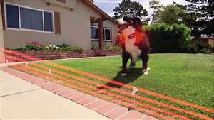 best invisible dog fence in july 2018 invisible dog With best rated invisible dog fence