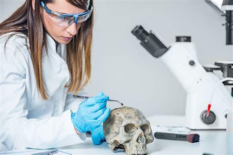 forensic dentistry  teeth