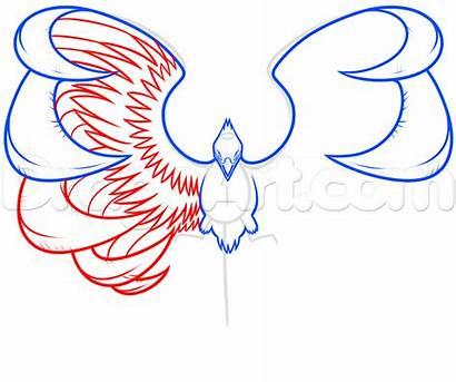 Phoenix Drawing Step Bird Clipart Sketch Draw