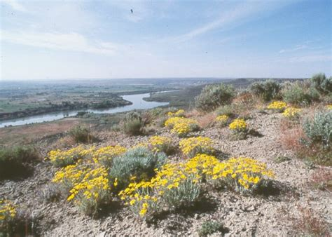 Hagerman Fossil Beds National Monument by Hagerman Fossil Beds National Monument