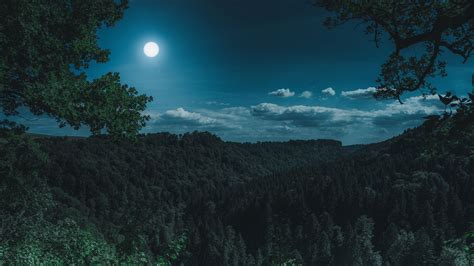 Night Forest Wallpapers Hd Download Free