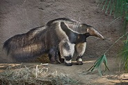 Los Angeles Zoo and Botanical Gardens Los Angeles Zoo and ...