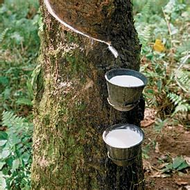location factors rubber plantations in malayasia and india