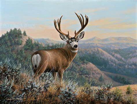beautiful canvas art prints wildlife  art