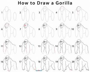 How To Draw A Gorilla Step By Step Pictures Cool2bkids