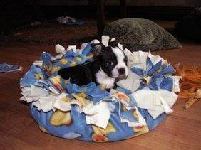 best 25 dog fleece ideas on pinterest dog coat pattern With no rip dog bed