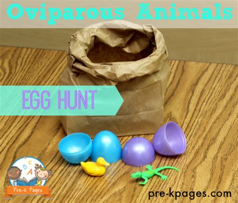 learning about eggs 384 | oviparous animals egg hunt