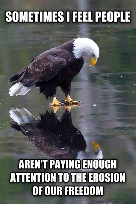 Eagle Memes - funniest bald eagle meme compilation america