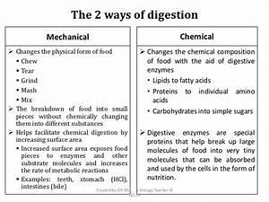 8 3  Digestive System