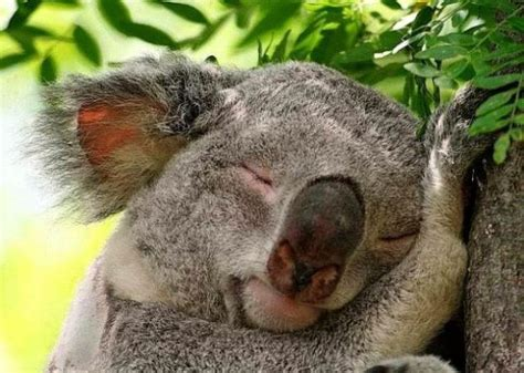 funny pictures  sleeping animals