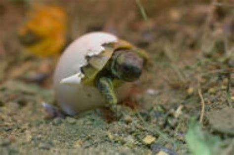 faire baisser nitrate aquarium comment faire baisser le taux de ph dans l aquarium de vos tortues