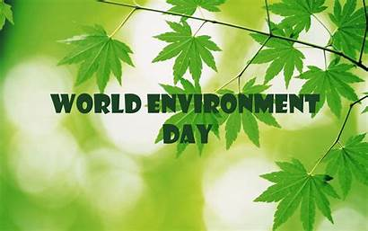 Environment Save Trees Wallpapers Plant Nature National