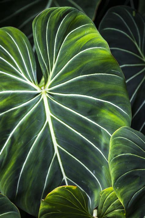 large leaf green rprtphoto