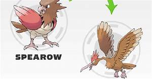 Image Gallery Spearow Evolution