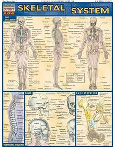 Skeletal System Review  For Pre
