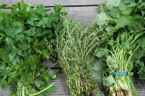 Garden Of Ulcerative Colitis by How To Prune Herbs For The Best And Freshest Results