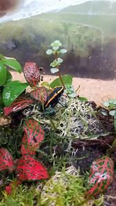 Frosch Als Haustier : dendrobaten vittatus in poppenricht reptilien terraristik kaufen und verkaufen ber private ~ Buech-reservation.com Haus und Dekorationen