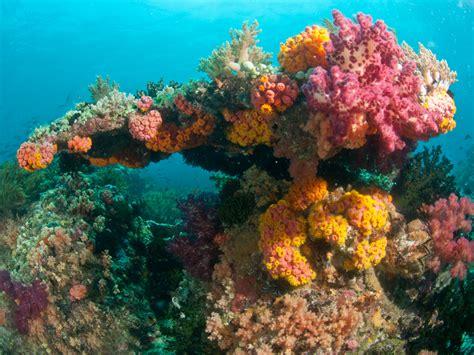 keindahan alam bawah laut raja at