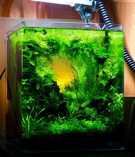 Cube Aquarium Aquascape by Aquascaping Grifon Quality Test Results Dennerle Nano