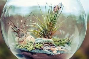 Feng Shui Pflanzen Reichtum : wie funktioniert ein ewiges terrarium ~ Markanthonyermac.com Haus und Dekorationen