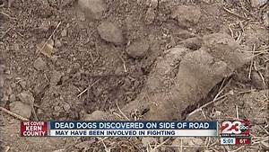 Dead dogs discovered on the side of a road in south ...