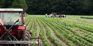 Organic Farms  Getting Things Off The Ground