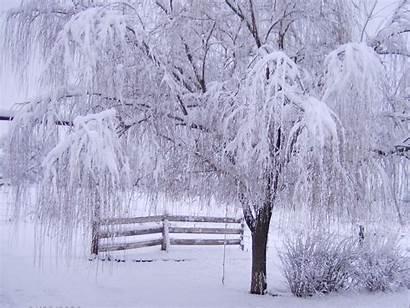 Winter Wallpapers Backgrounds Desktop Downloads Nature