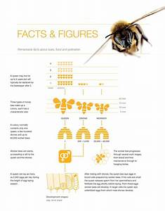 The Importance Of Beeing Bee Friendly