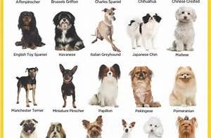 Medium Small Dog Breeds Names Hd Wellness - Litle Pups