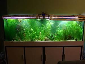 Aquarium Led Beleuchtung : led beleuchtung aquarium led forum ~ Frokenaadalensverden.com Haus und Dekorationen