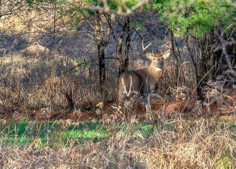 options   hunters   head   deer