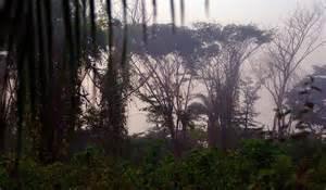 Foresta di Cantanhez - La foresta primaria è una foresta ...