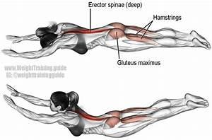Superman Exercise Muscles | www.pixshark.com - Images ...