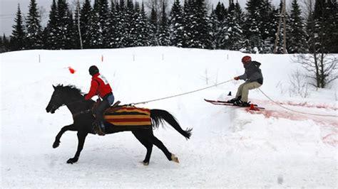 skijoring  equine sport     winter