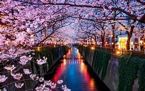 Sakura cerezos en flor en Japón Viajes Ecuador