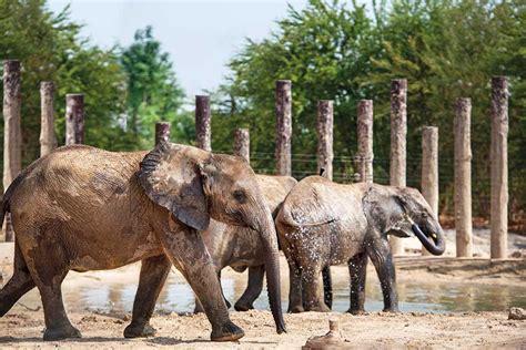 Dubai Safari Park to reopen with new animals, adventures