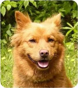 Mindy   Adopted Dog   Mocksville, NC   Finnish Spitz/Corgi Mix