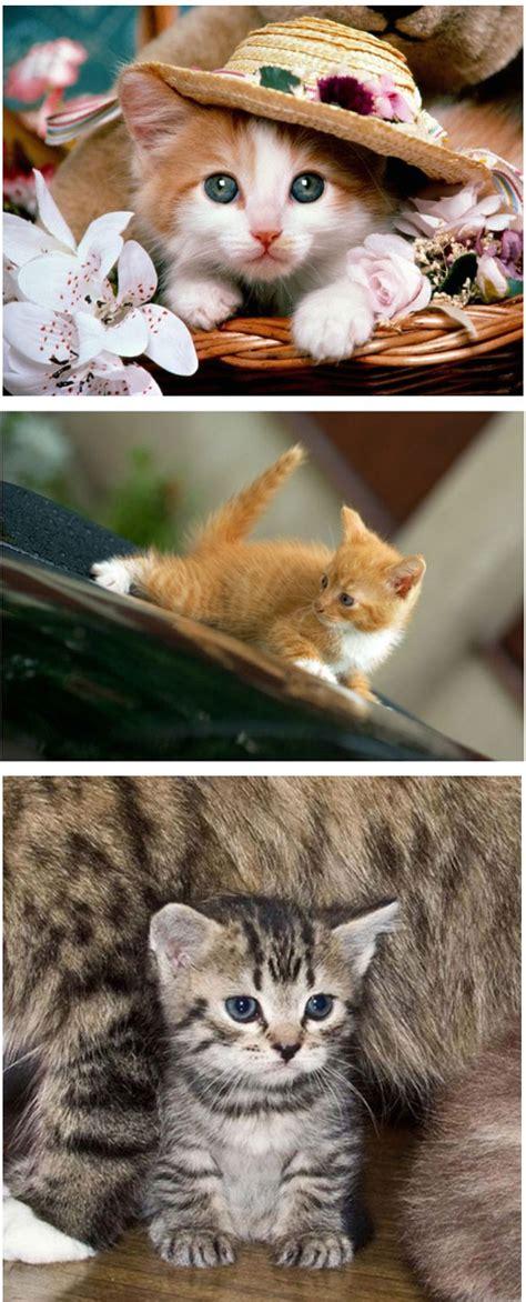 comel kot koleksi gambar kucing  seriusly comel