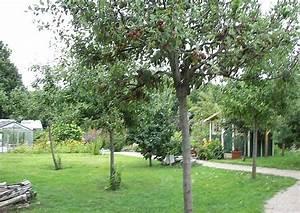 Apfelbaum Hochstamm Kaufen : apfelbaum apfel hochstamm und kleingartenanlage ~ Orissabook.com Haus und Dekorationen