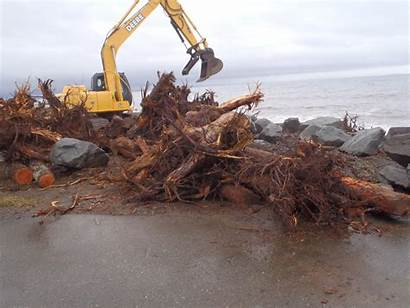 Debris Bc Put Woody Beach Highways Driftwood
