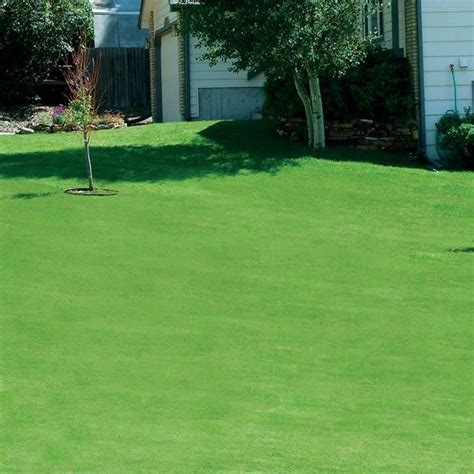 grass canada lawn seed canadian rye lawns cggs gift